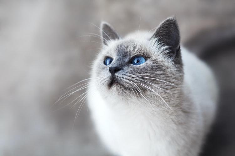 cat boarding sydney